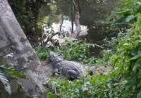 selfie met krokodil