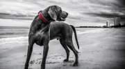 Oppassen voor hondsdolheid in Thailand