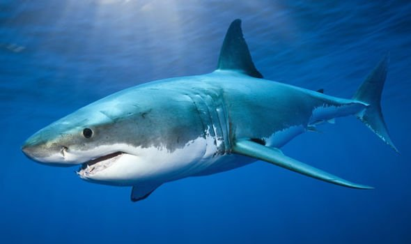 Haaien in Hua Hin?