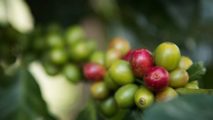 Koffie in Thailand is soms ware kunst