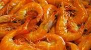 Smullen geblazen op Songkhla Seafood festival
