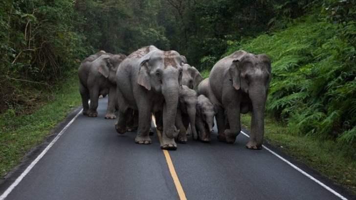 Olifanten in Khao Yai National Park spotten