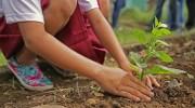 Boek een kamer, plant een boom