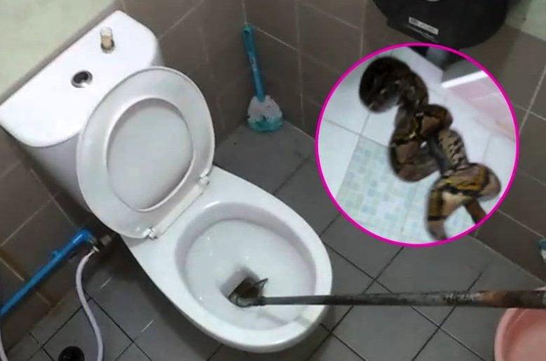 Slang in Thais toilet