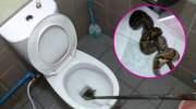 Slang in Thais toilet komt vaker voor dan je denkt