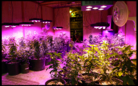 Plant Grow Light For Indoor CrxSunny LED 1000W Review