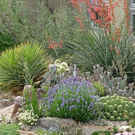 desert landscaping plants drought