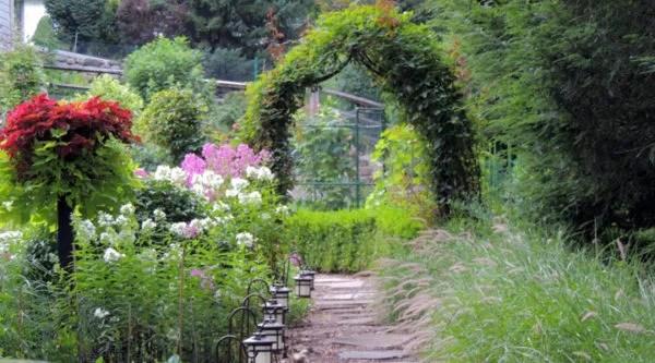 Garden-Ornamental-Grass-Clare-Oliva-NJ