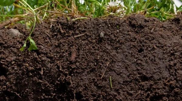Healthy soil.