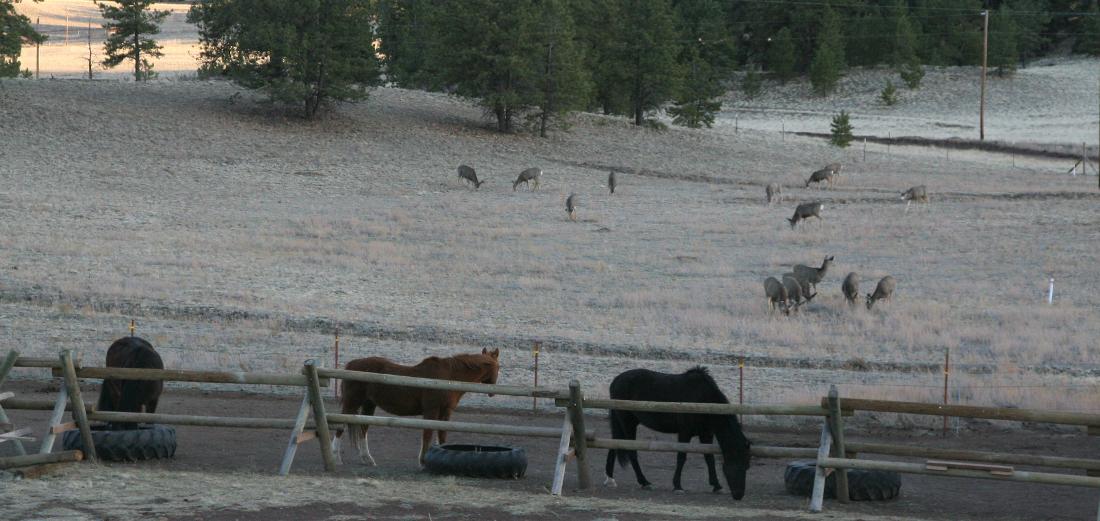 horses-deer 1100