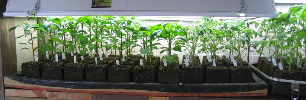 seedlings1024