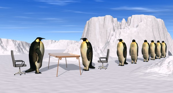 bigstockphoto_Penguins_Recruiting_Interview_1619040-e1310011767456