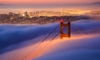 cannabis culture in San Fransisco