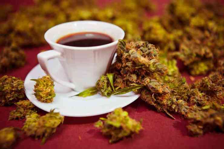 Coffee and Weed: May be More Than a Coincidence!