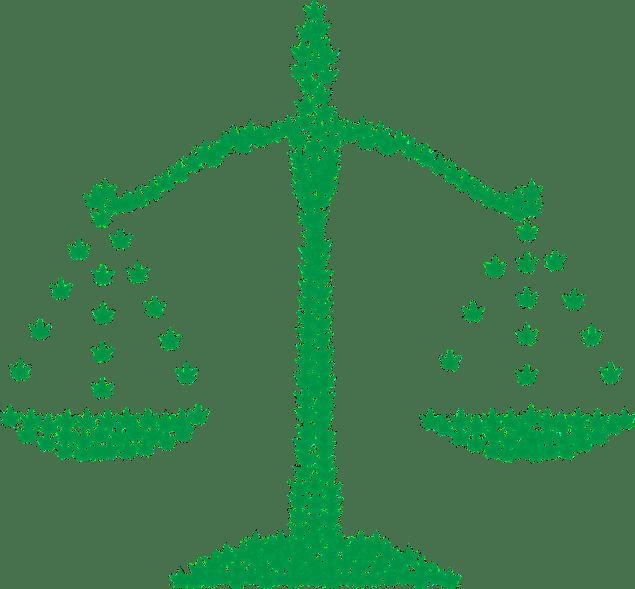 legalizing marijuana growing cannabis