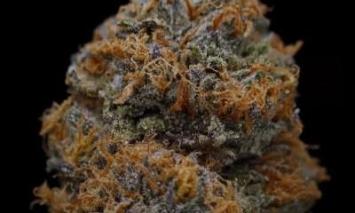 Cannabis Strains That Reduce Stress
