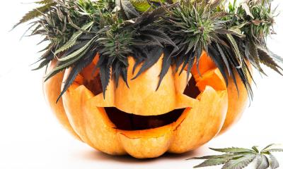 Halloweed Edibles: Will Unsuspecting Kids Get Tricked by Treats?