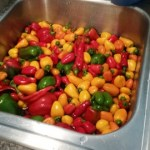 washing peppers