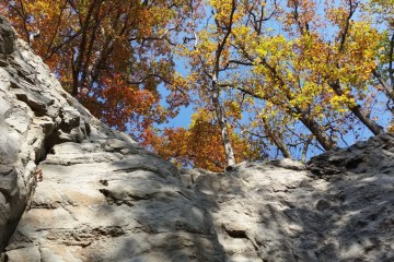 8 Wonders of Coopers Rock