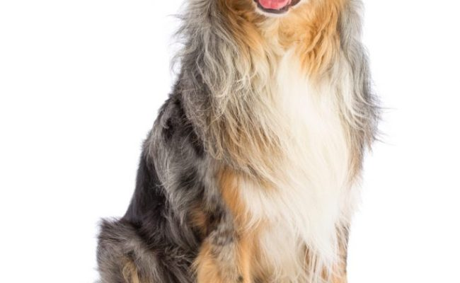 Why Mental Stimulation Is Vital For Your Dog Highland