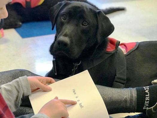 dog at school reading program