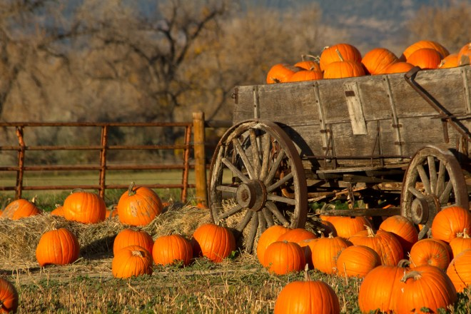 burnet county fall festivals, pumpkin patch