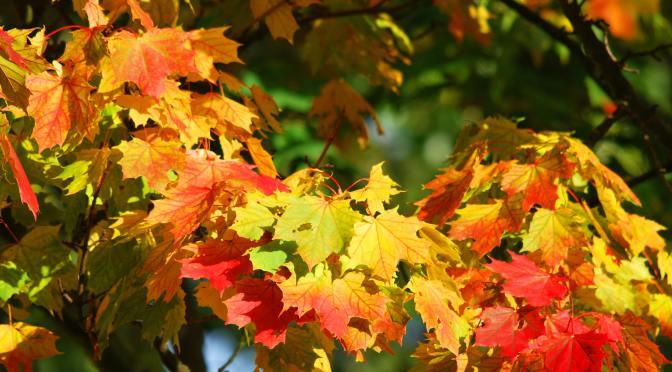 fall colors real estate