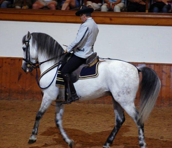 Andalusian School Of Equestrian Art - Stableexpress