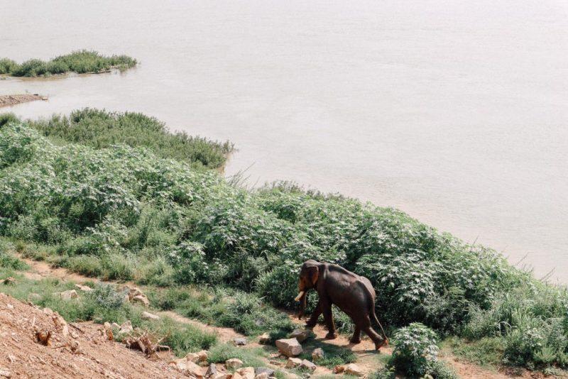 รีวิว เที่ยวหลวงพระบาง ช้าง