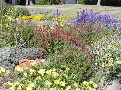 Plant List For The Texas Panhandle Flowers High Plains Gardening