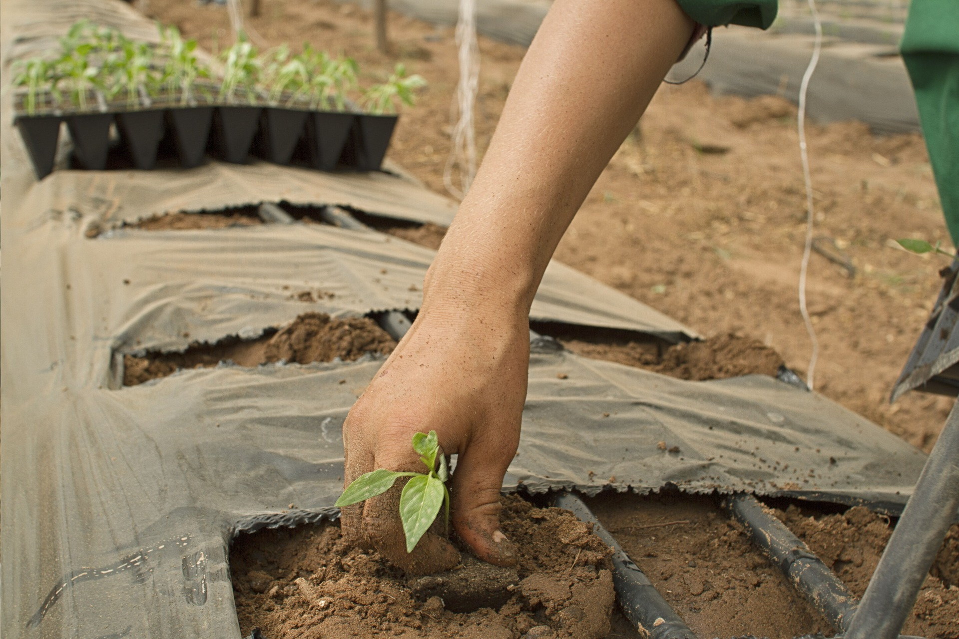 Home & Garden: A New Soil Conditioner Has Several Benefits