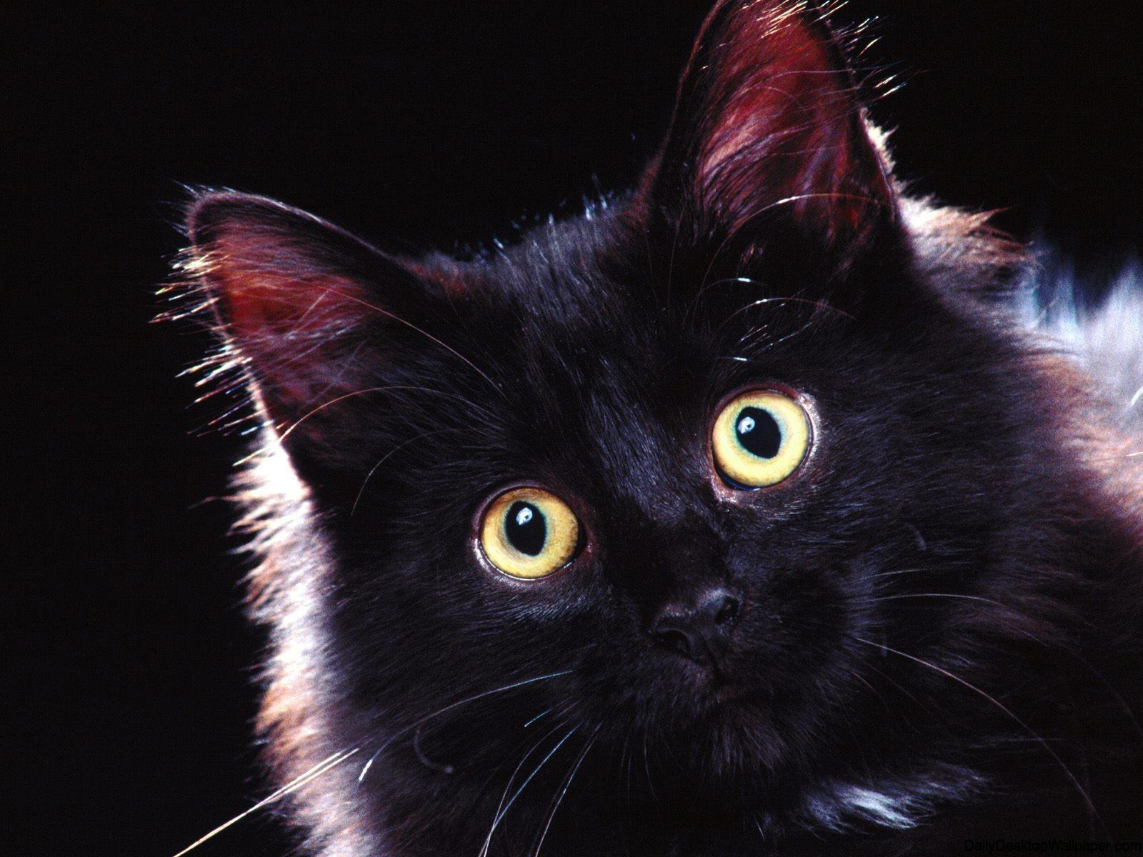 Cute Black Cat Iphone Wallpaper Surprised Cat Hd Wallpaper Hd Wallpapers