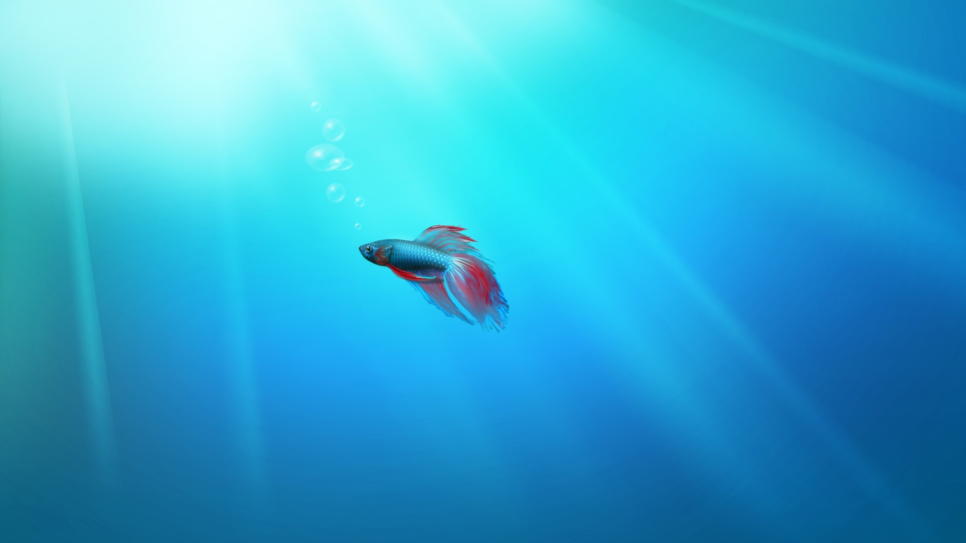 Iphone 7 Fish Wallpaper Hd Windows 7 Fish Wallpaper Hd Wallpapers
