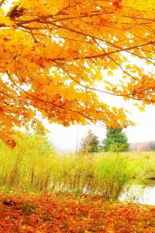 Iphone X Wallpaper Pack Hd Autumn Scenery Wallpaper Hd Wallpapers