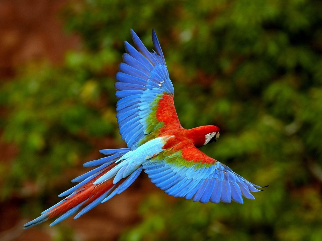 Colourful Wallpaper Iphone X Colourful Flying Bird Hd Wallpapers