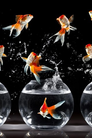 3d Moving Wallpaper For Windows 7 Free Download Goldfish Galore Hd Wallpapers