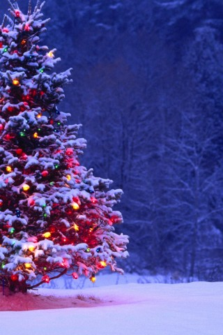 Full Hd Car Wallpapers 1080p Free Download Light Covered Snowy Christmas Tree Hd Wallpapers