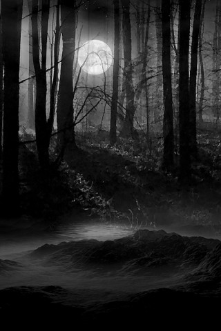 Gloomy Fall Wallpaper Secluded Dark Woods Wallpaper Hd Wallpapers
