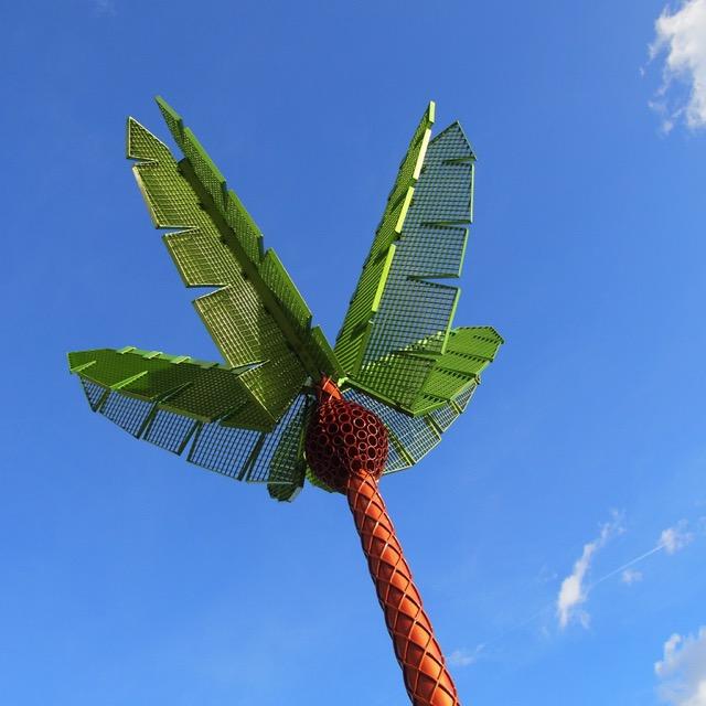 paradise-palm