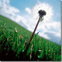 weed-grass-cloud