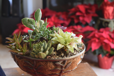 A Guide to the Incredible Health Benefits of Indoor Plants