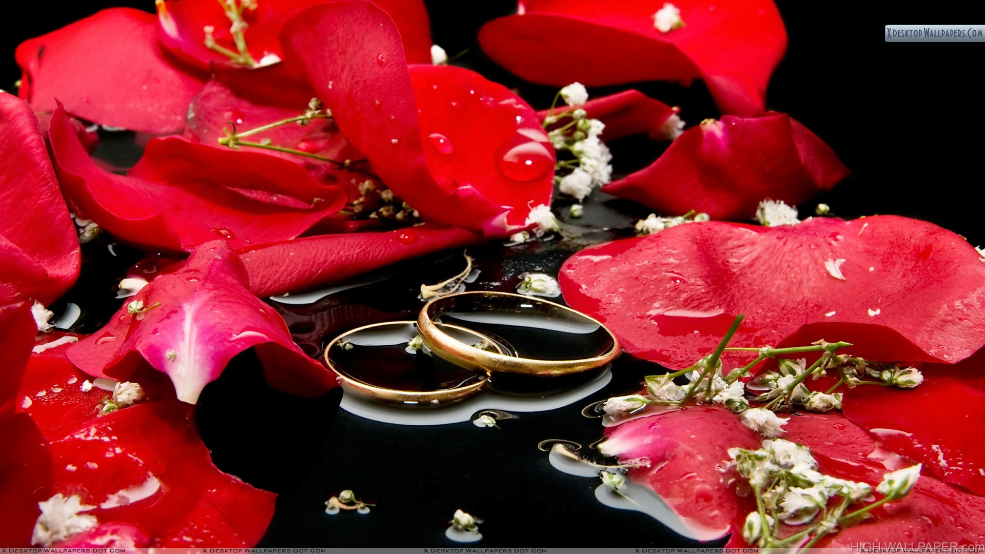 Wedding Rings With Red Rose And Water HD Wallpaper