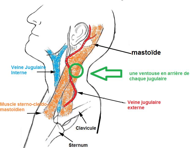 jugulaires externe
