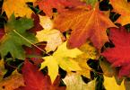 La alimentación durante el otoño