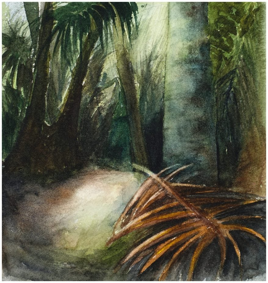 Dark native bush, The Grove, Clifton, New Zealand. Watercolour sketch