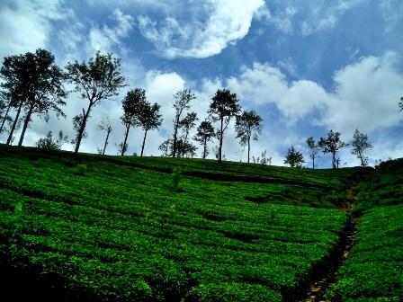 Fall Scenery Hd Wallpaper Sri Lanka Nuwara Eliya Tea Plantations Sri Lanka