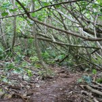 At one point the dense forest is a maze of intertwined roots and branches.