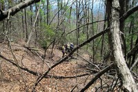 MST - Woods Mtn blowdown