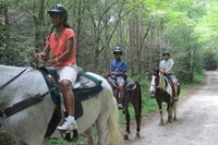 OVC - Horses on Bradley Creek Trail