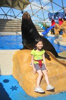 Seaquarium - Sealions and Hannah